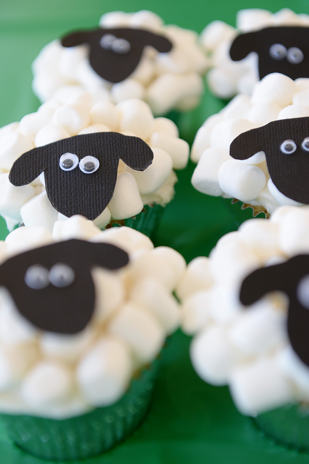 Baa!  These sheep look like they are up to no good ...