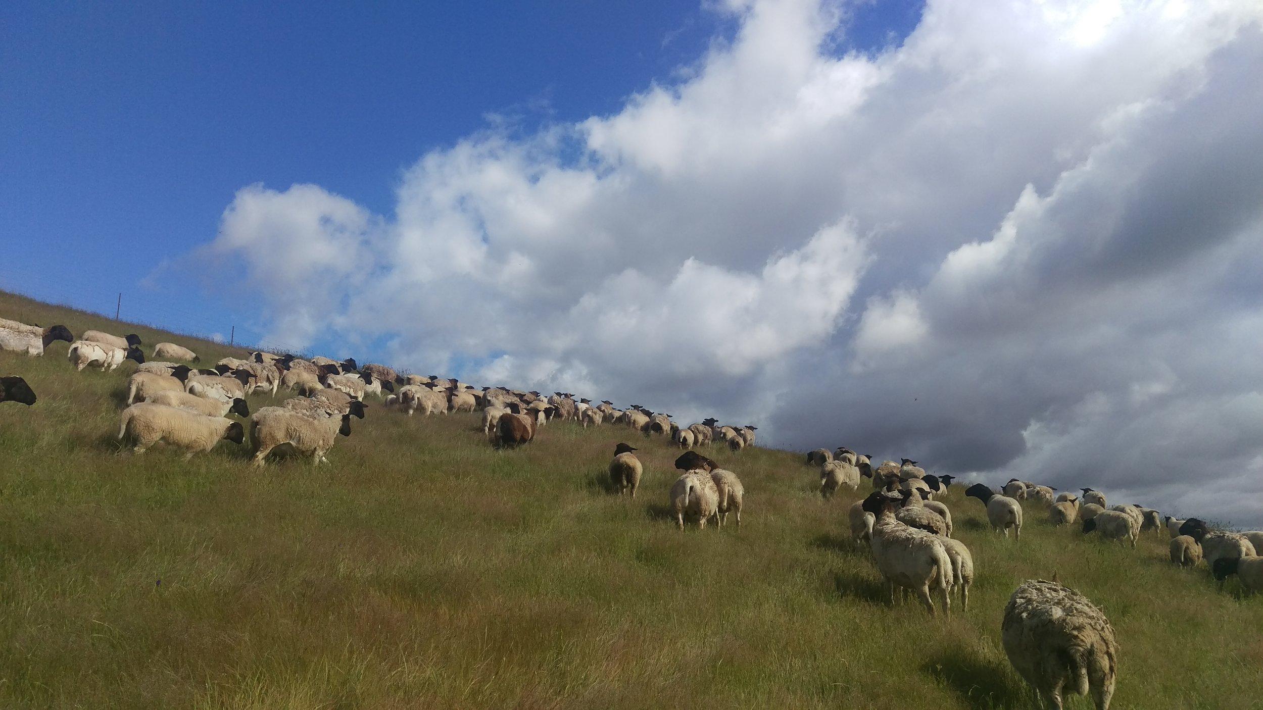 Visit My Farm Australia