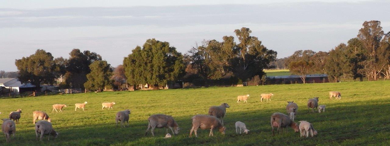 Visit My Farm Australia Hazeldean Farm