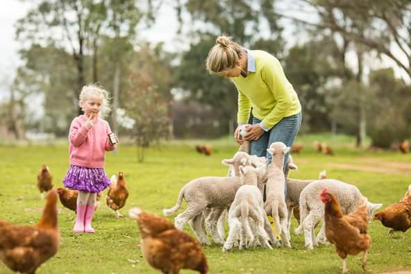 Visit My Farm Australia - Lashbrook Farm, Junee NSW