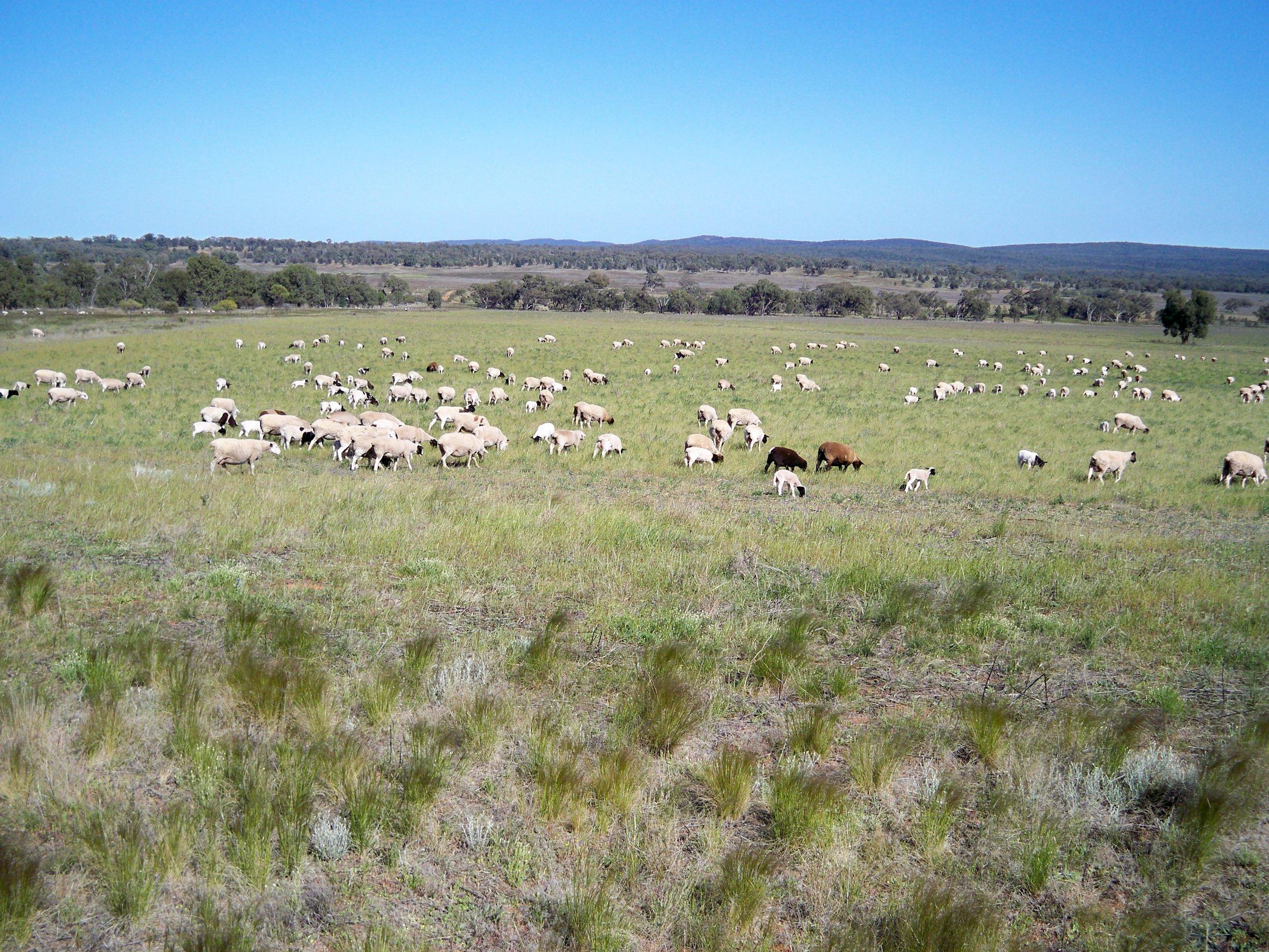 Visit My Farm Australia - Selby, Rankin Springs NSW