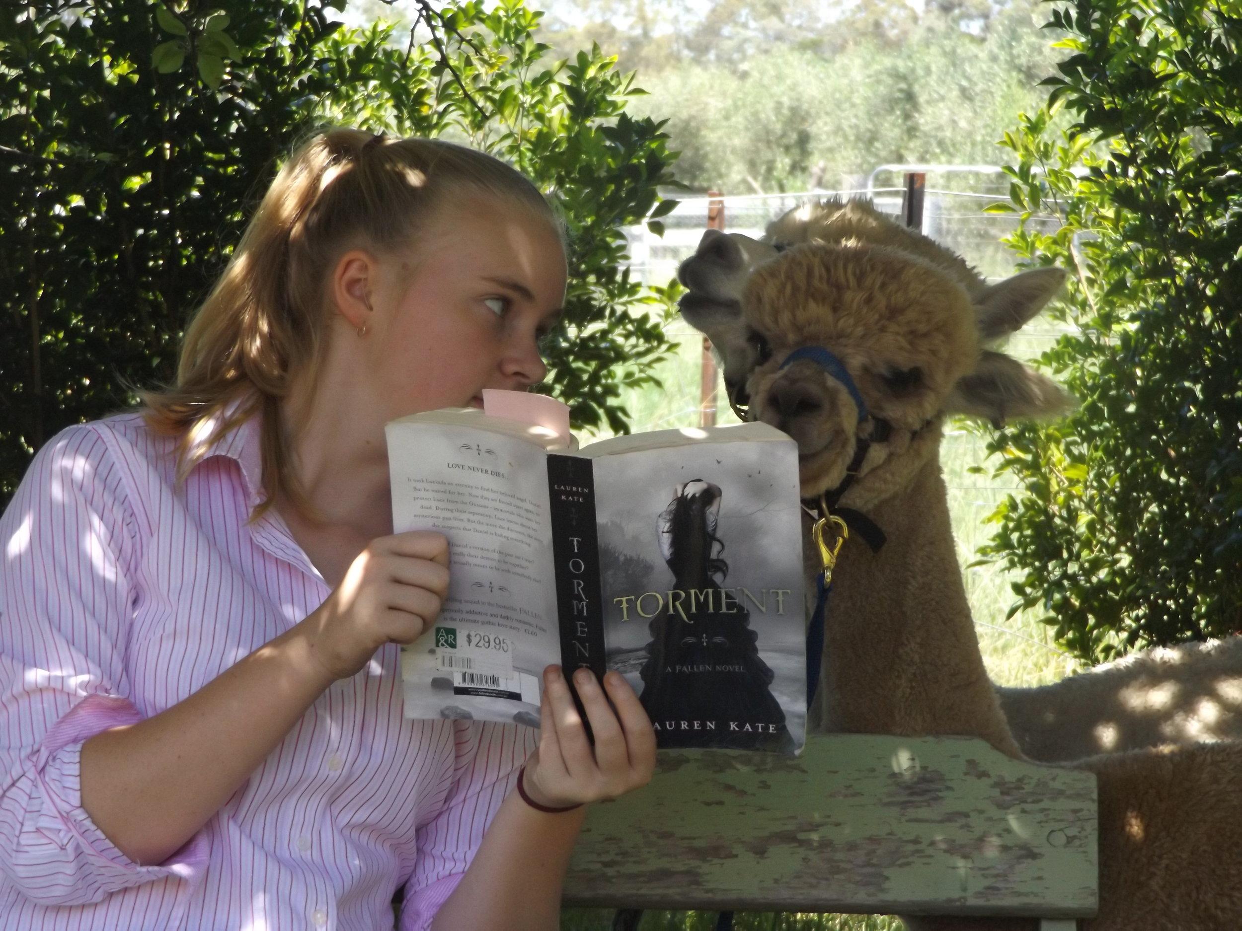 Visit My Farm Australia - Storybook Alpacas, Bargo NSW