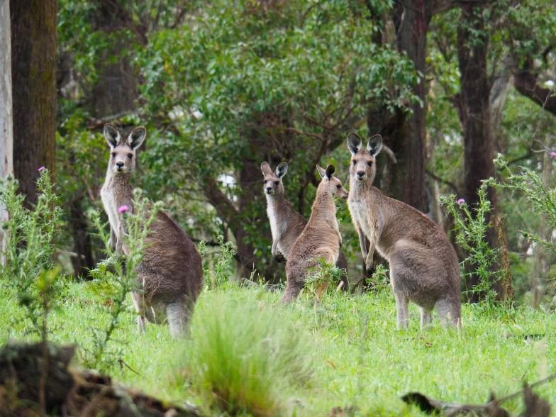 Visit My Farm Australia - Alinjarra, Hernani NSW