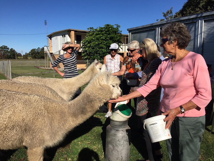Visit My Farm Australia - Cardiff Alpacas, Harwood NSW