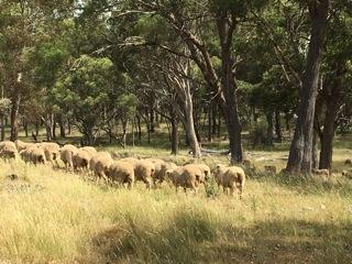 Visit My Farm Australia - Crossmaglen, Glen Innes NSW