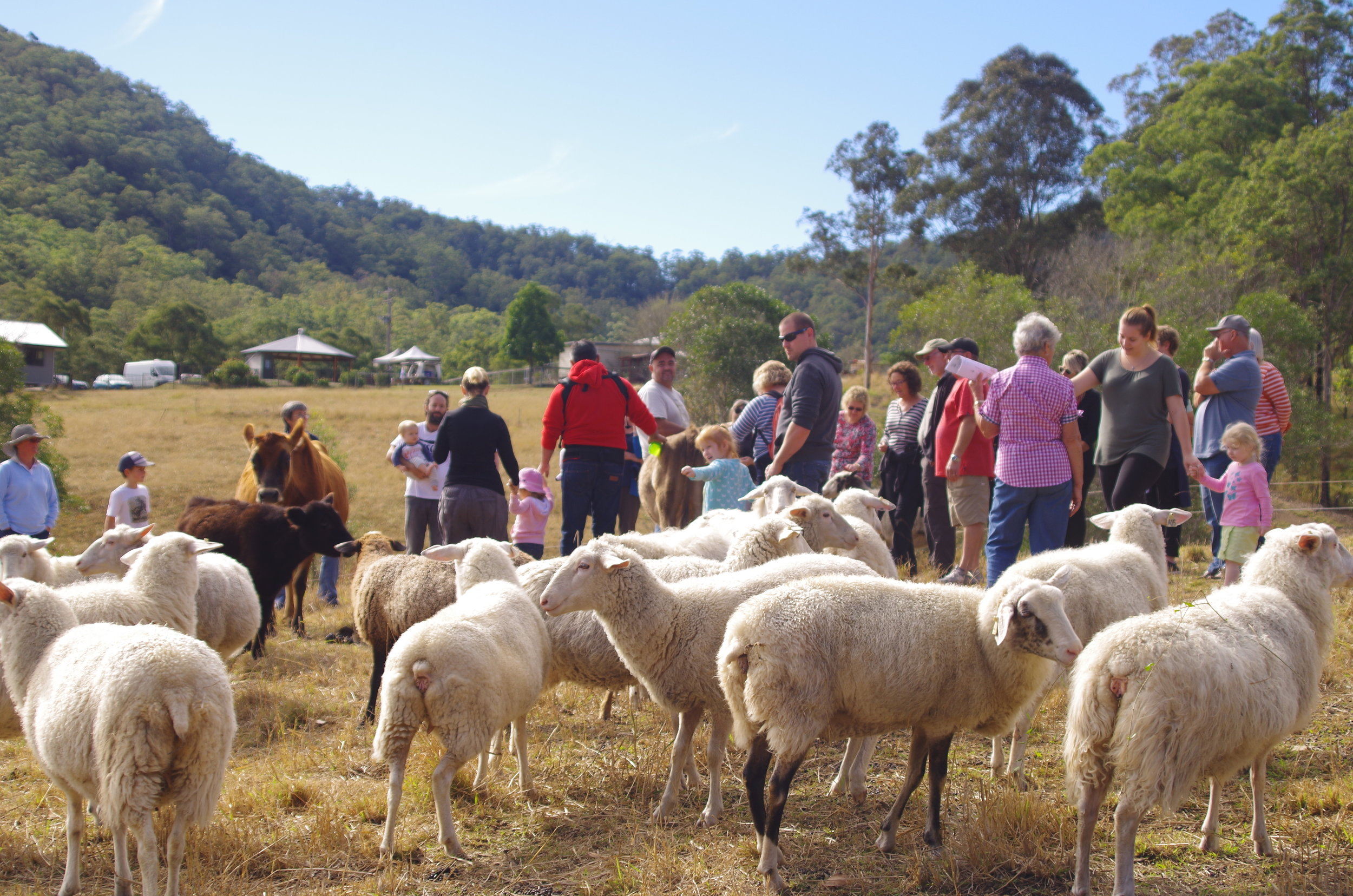 Visit My Farm Australia - Ewetopia, Ellenborough NSW