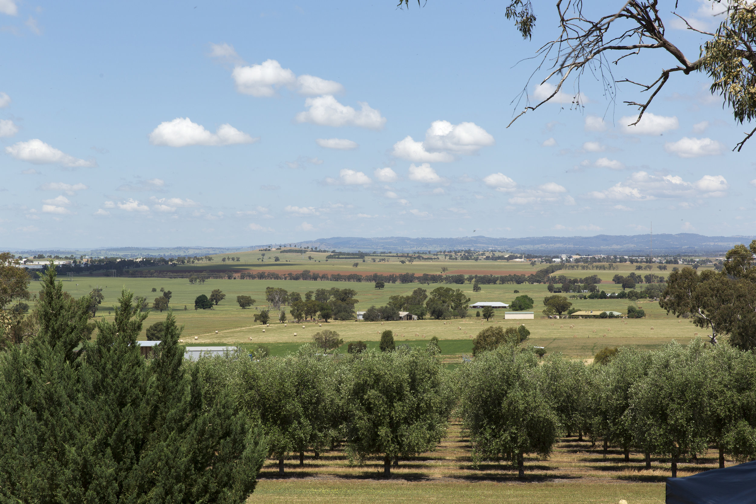Visit My Farm Australia - Wollundry Grove, Brucedale NSW