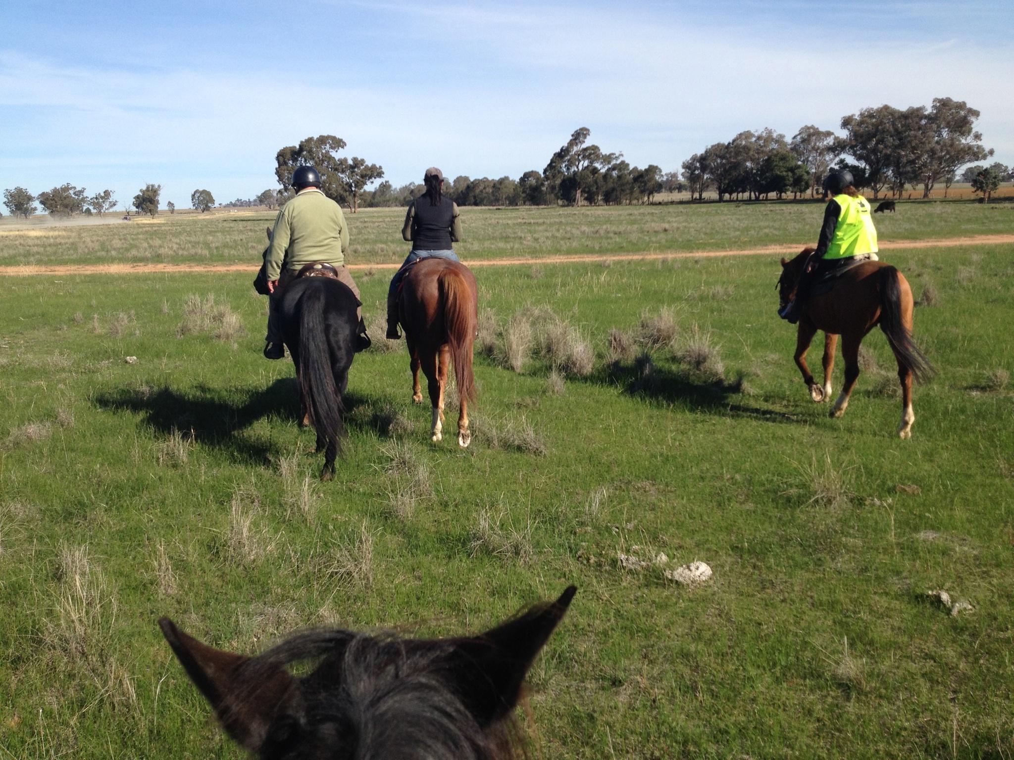 Visit My Farm Australia - Parafield Olives, Yarragundry NSW