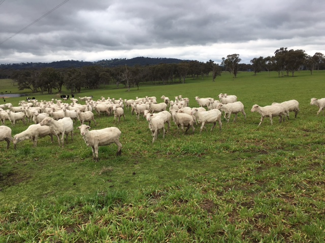 Visit My Farm Australia - Boxley, Walcha NSW