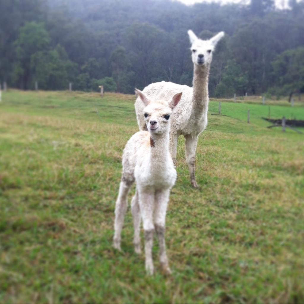Visit My Farm Australia - Little Valley Farm, Laguna NSW