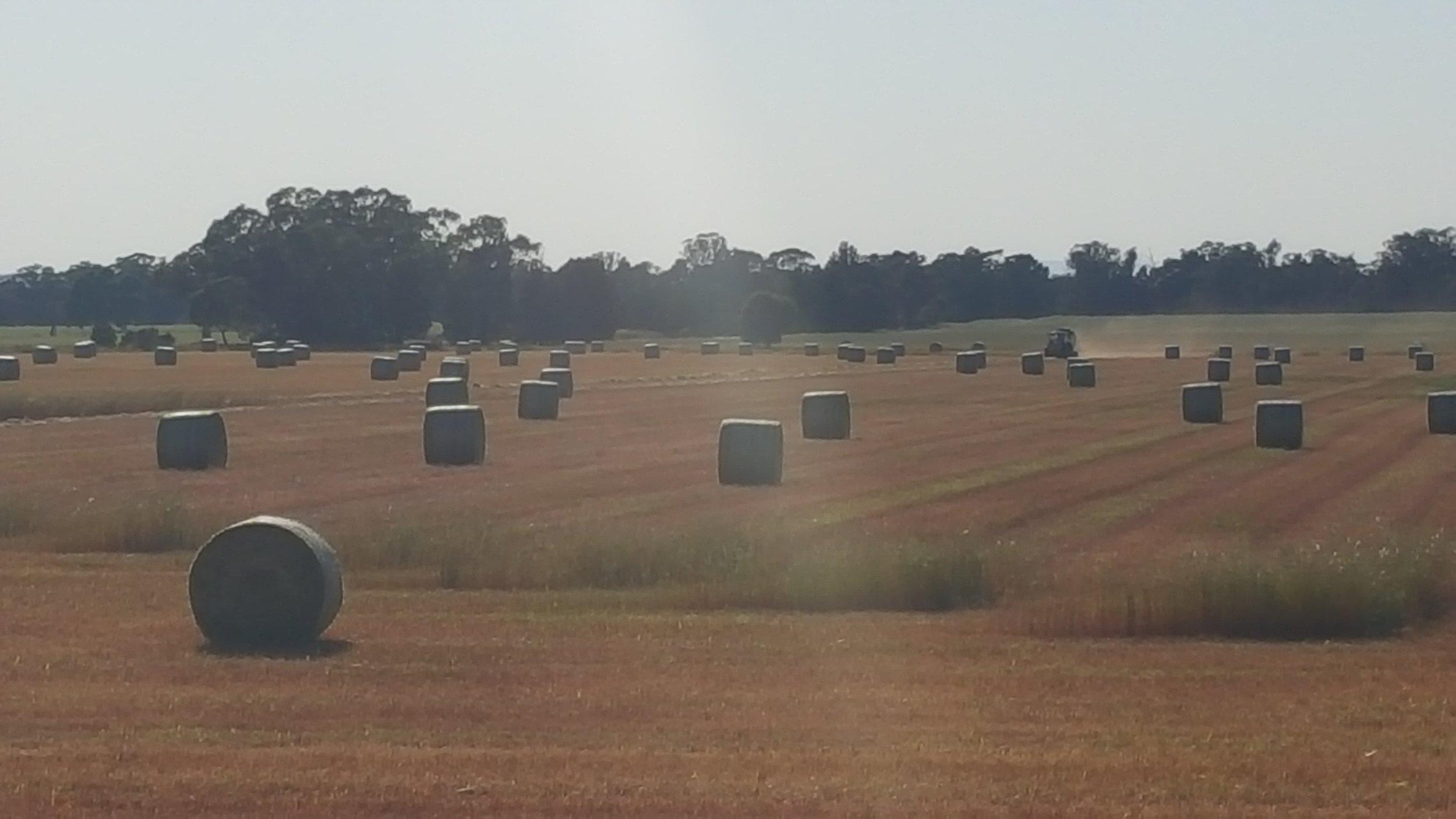 Visit My Farm Australia - Girraween, Tullamore NSW