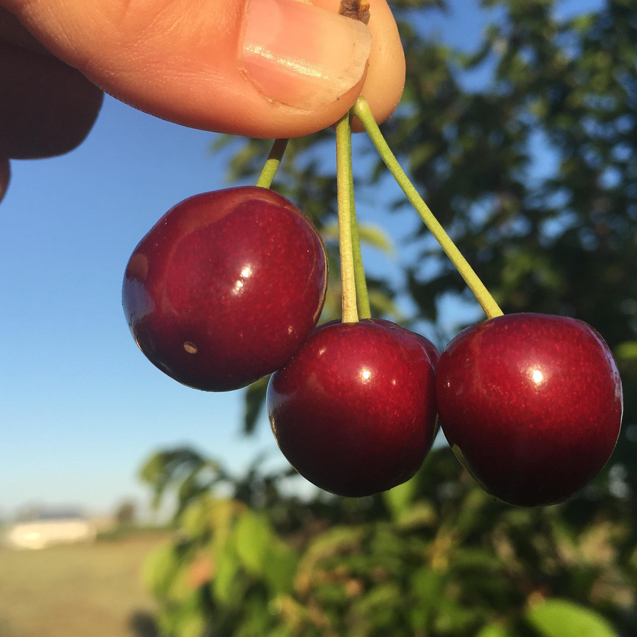 Visit My Farm Australia - Roth Family Orchard, Mudgee NSW