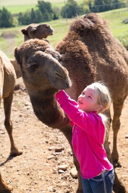 Visit My Farm - Piercefield Camel Milk, Muswellbrook NSW