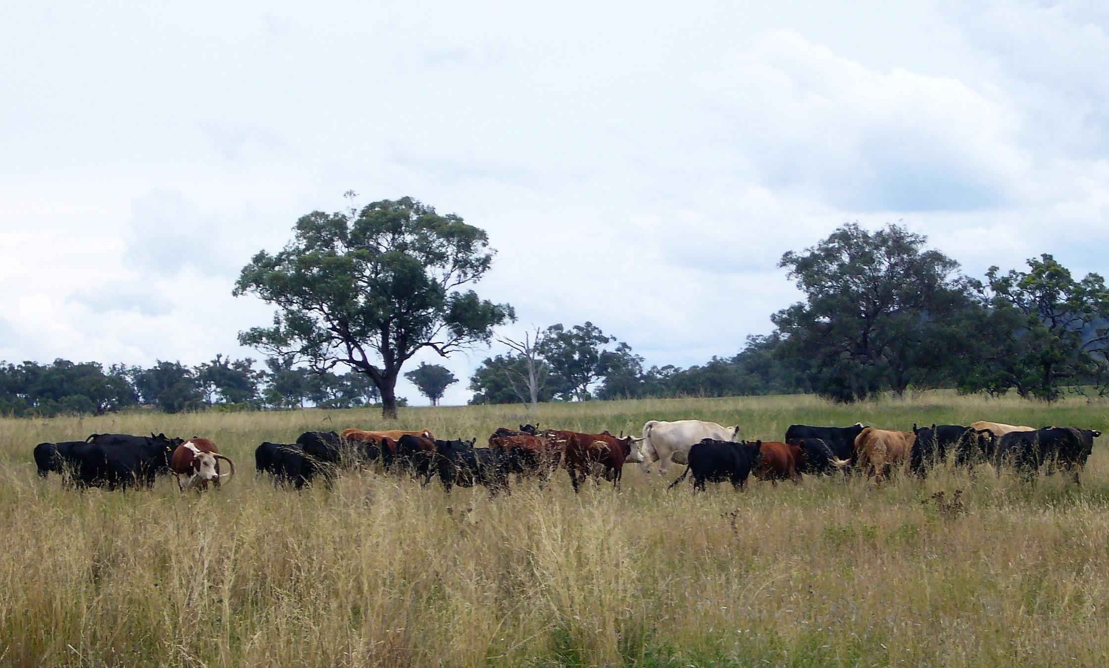 Visit My Farm Australia - Tallawang, Willow Tree NSW