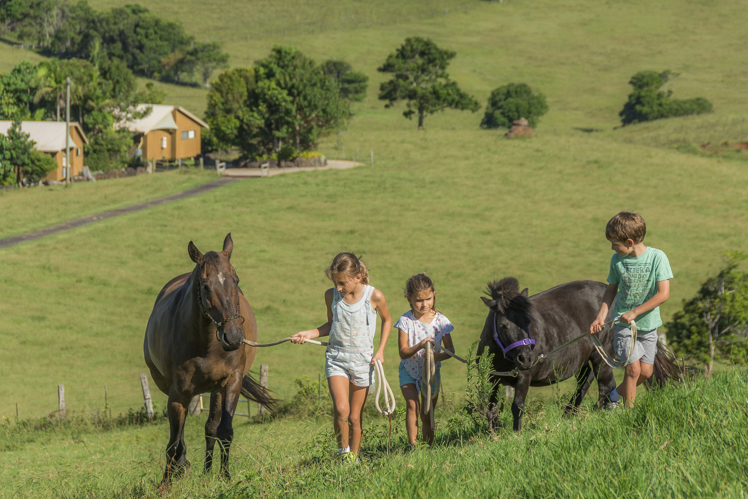 Visit My Farm Australia - Byron Bay Farmstay, Byron Bay NSW
