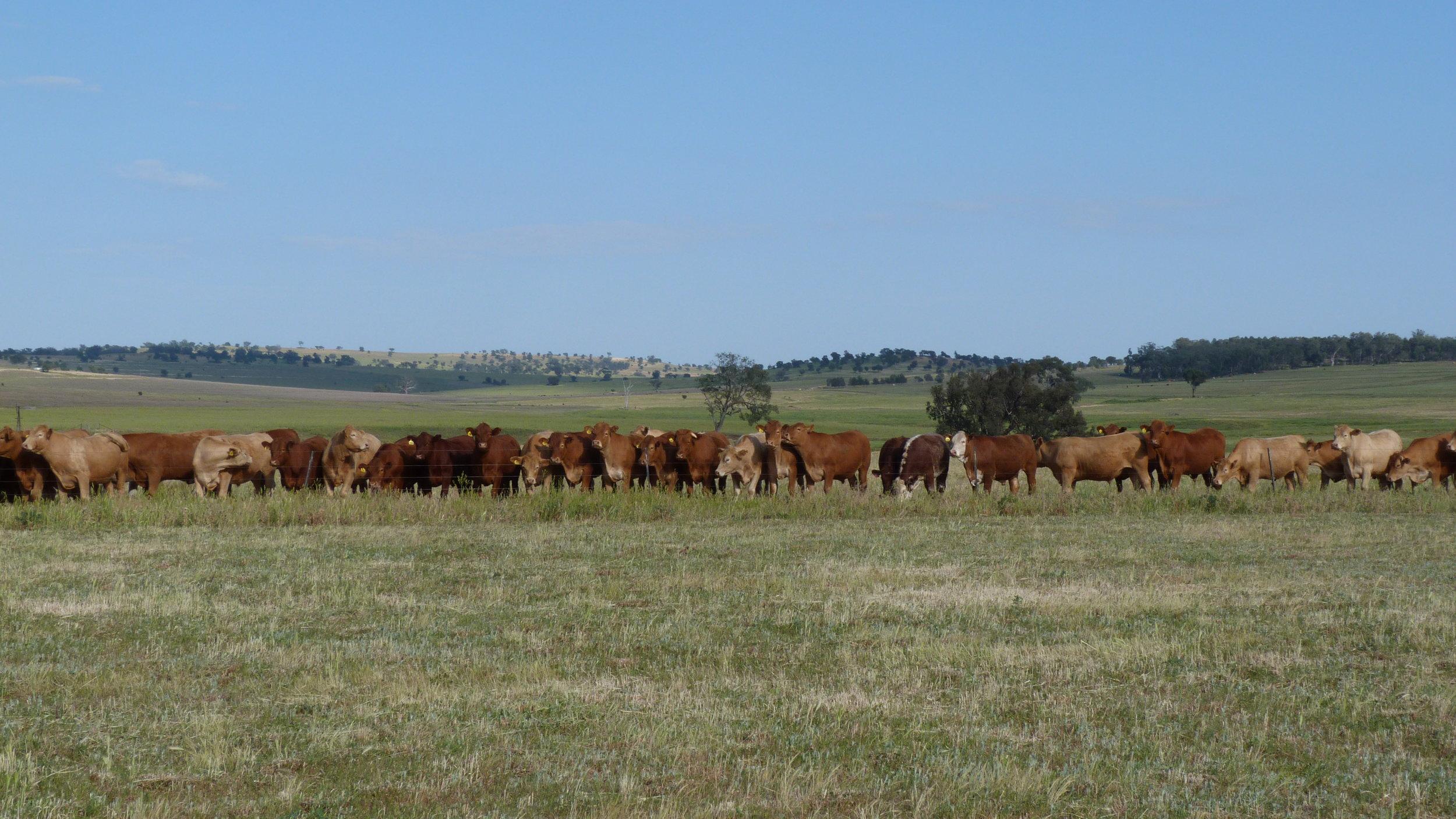 Visit My Farm Australia - Pibbon, Mendooran NSW