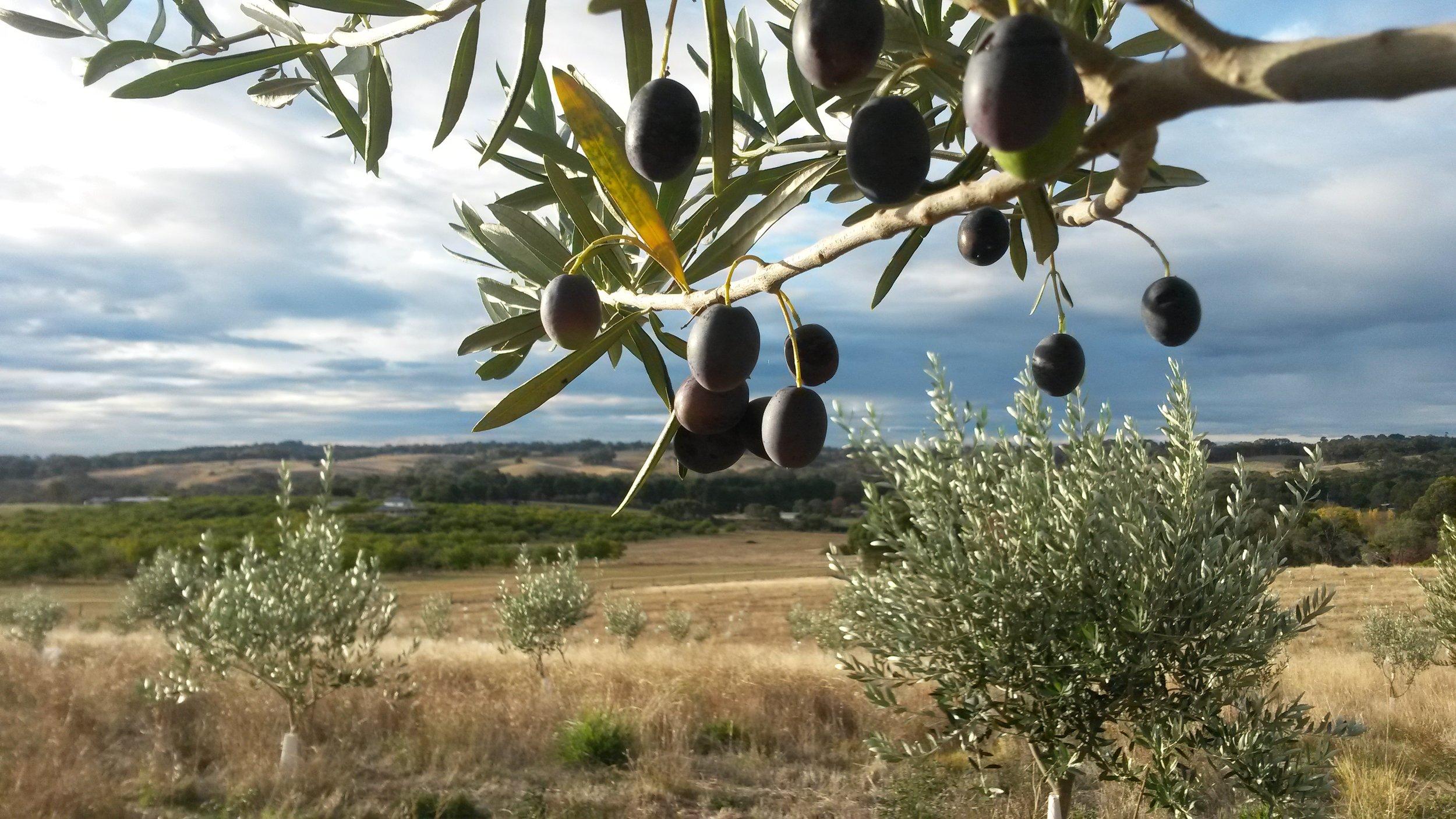 Visit My Farm Australia - Gamila, Beechworth Victoria