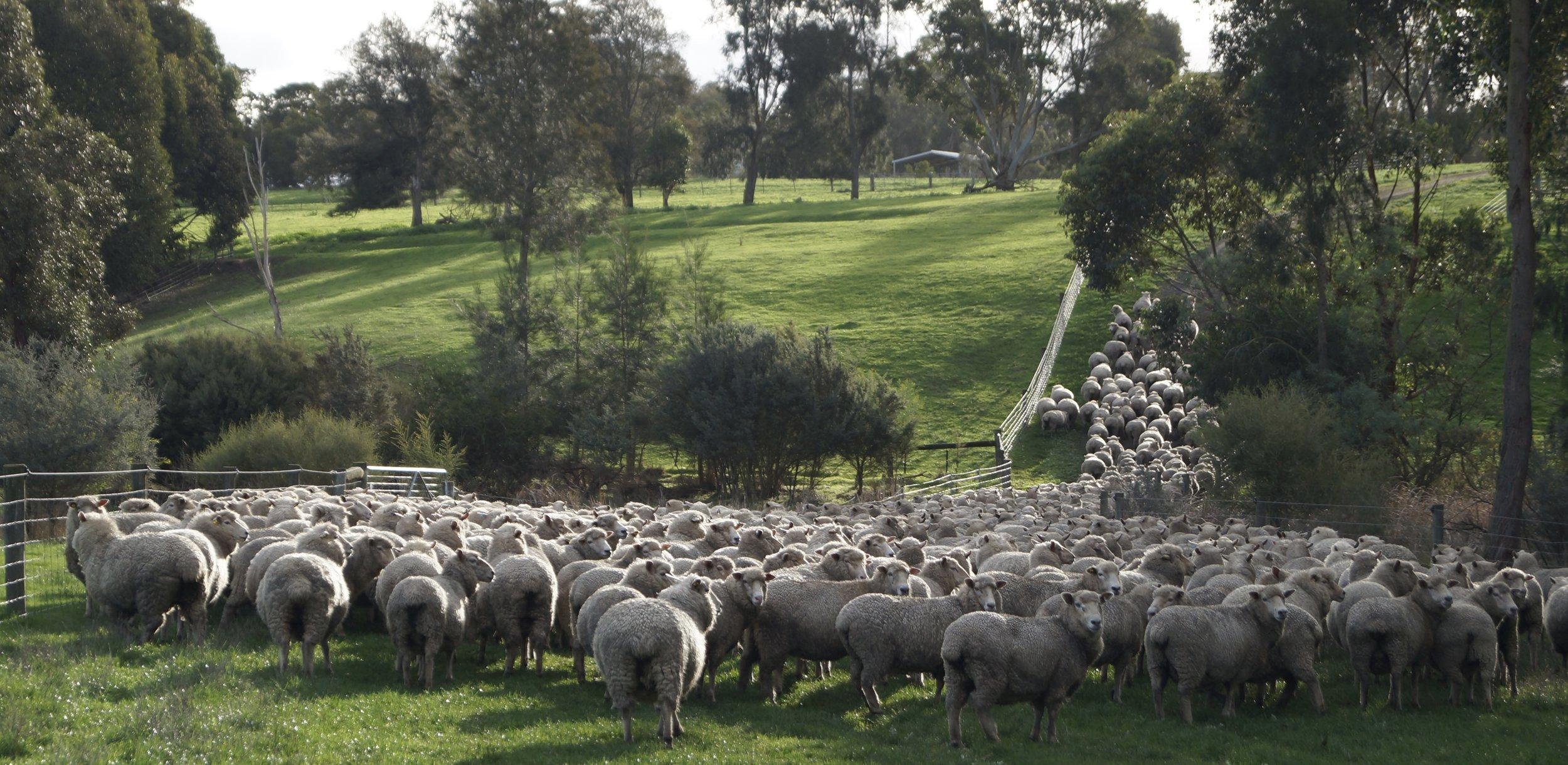 Visit My Farm Australia - Yan Yan Gurt West, Deans Marsh VIC