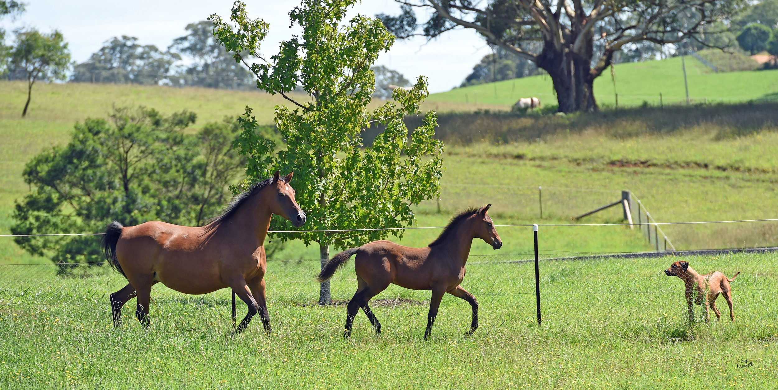 Illawarra & Southern Highlands -