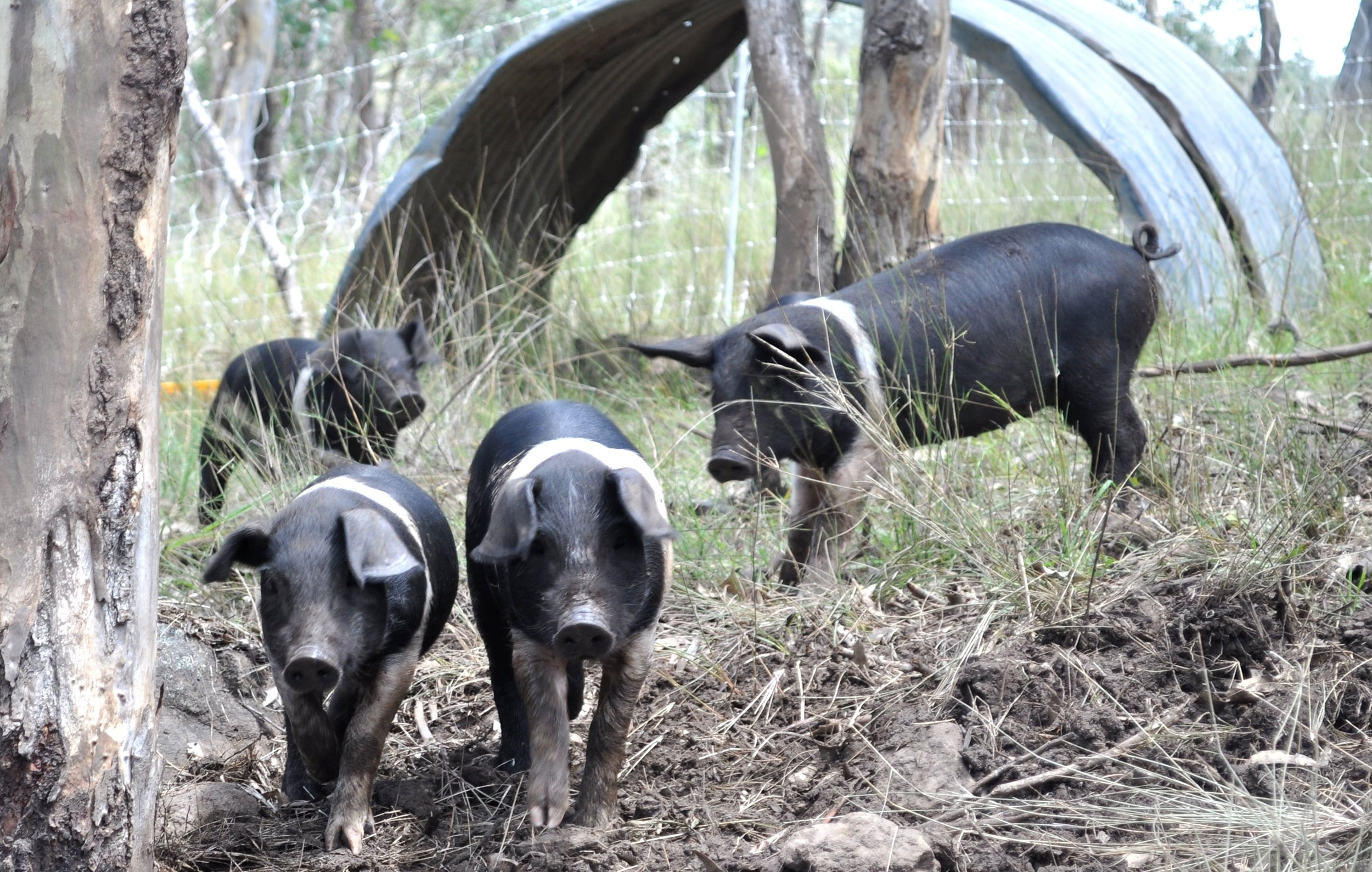 Visit My Farm Australia - Gleneden, Maryvale QLD