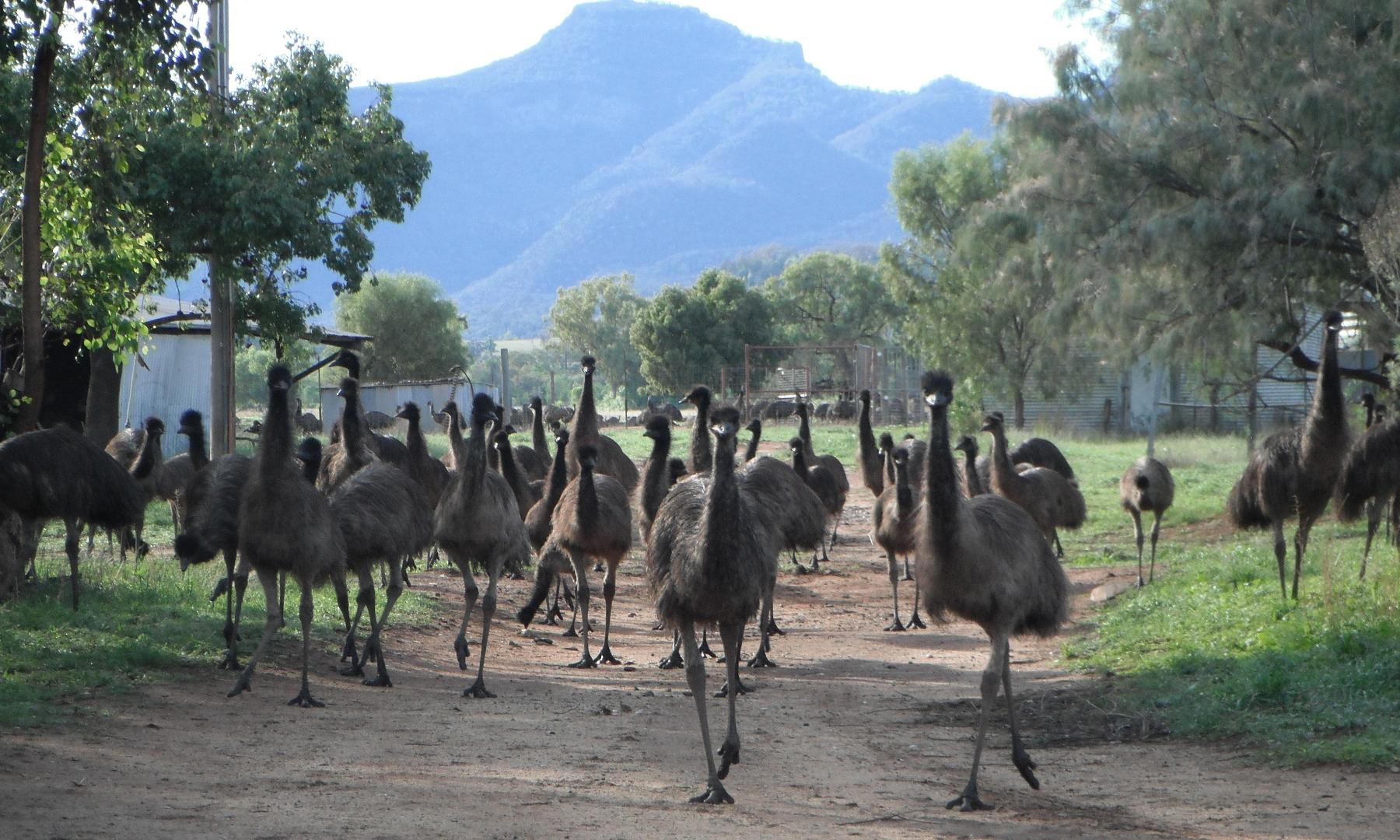 NSW FARMS -