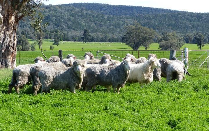 Visit My Farm - Round Range, Eugowra NSW