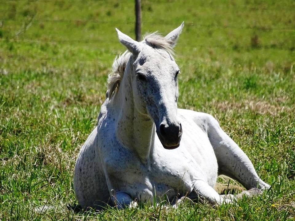 Wrangler unicorn.jpg