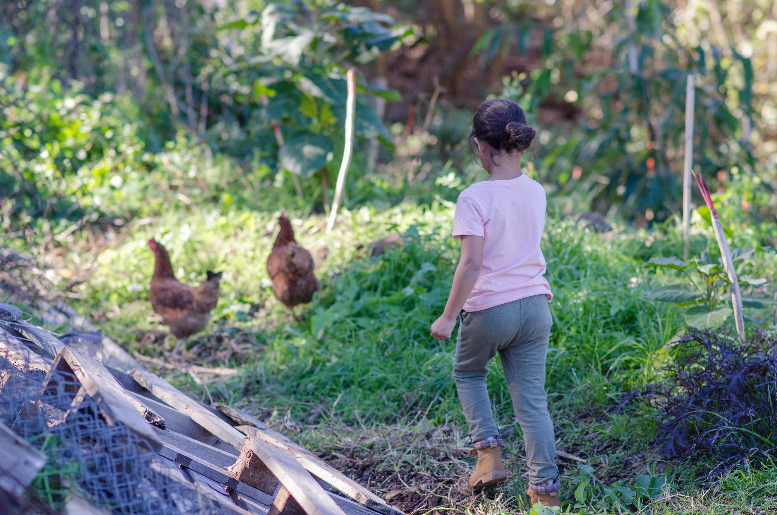 Green Connect child and chickens.jpg