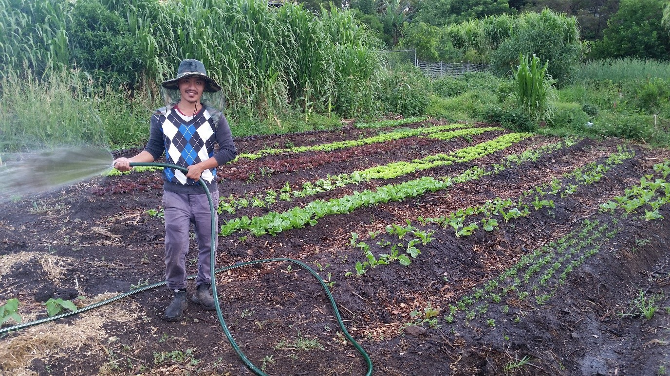 Green Connect watering salad beds.jpg