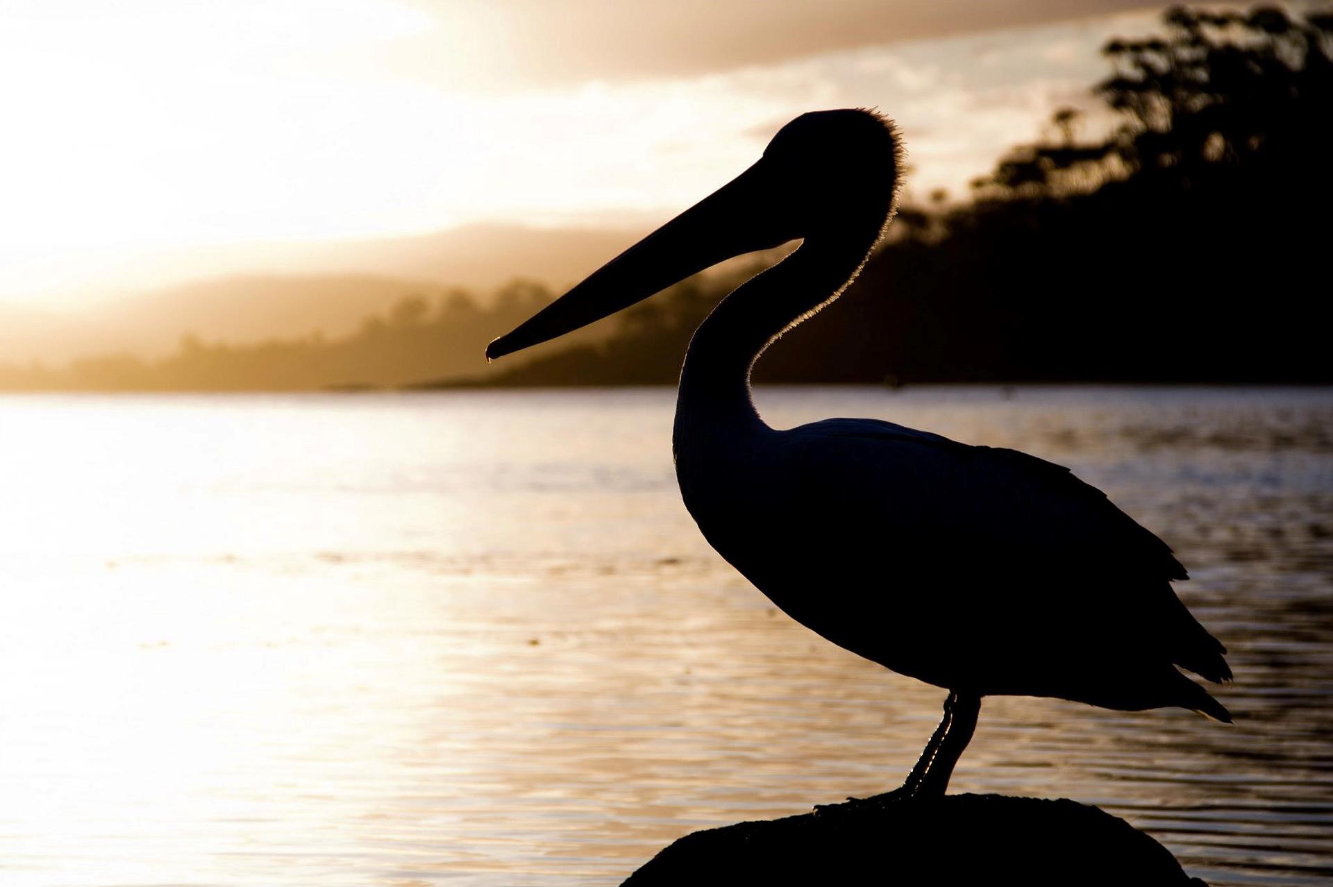 Nature photography | St Helens Tasmania