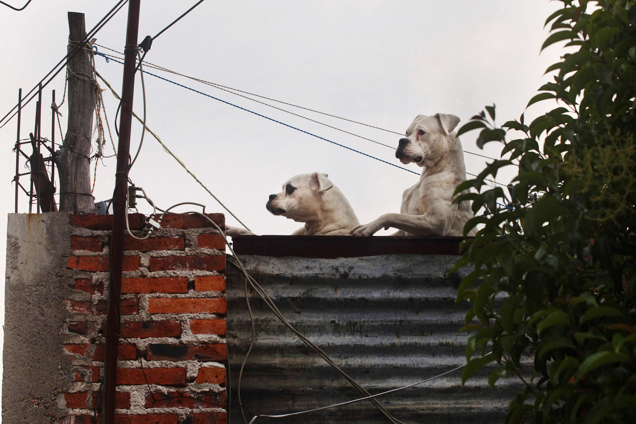 roof dogs-16.jpg
