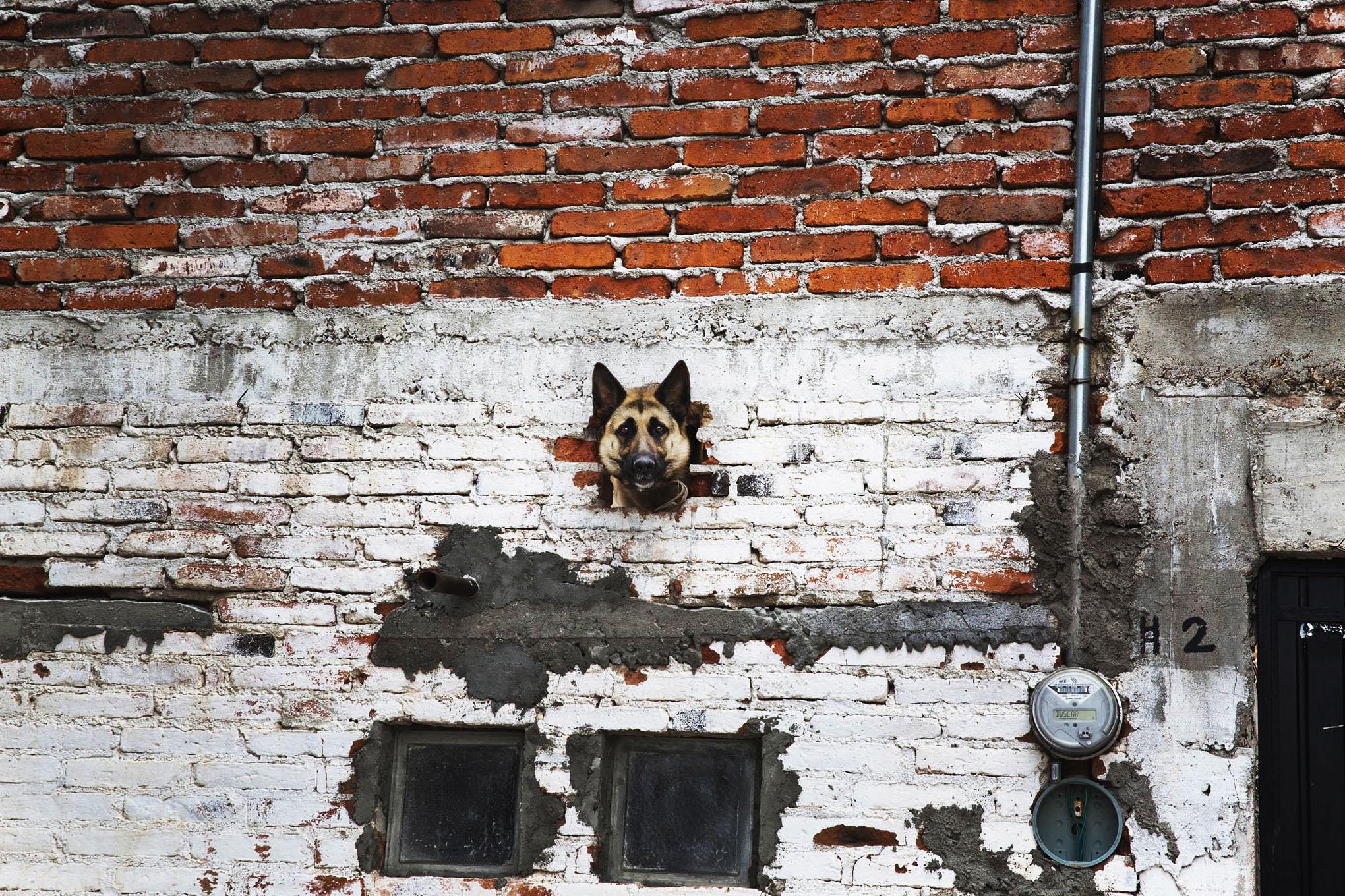 roof dogs-9.jpg