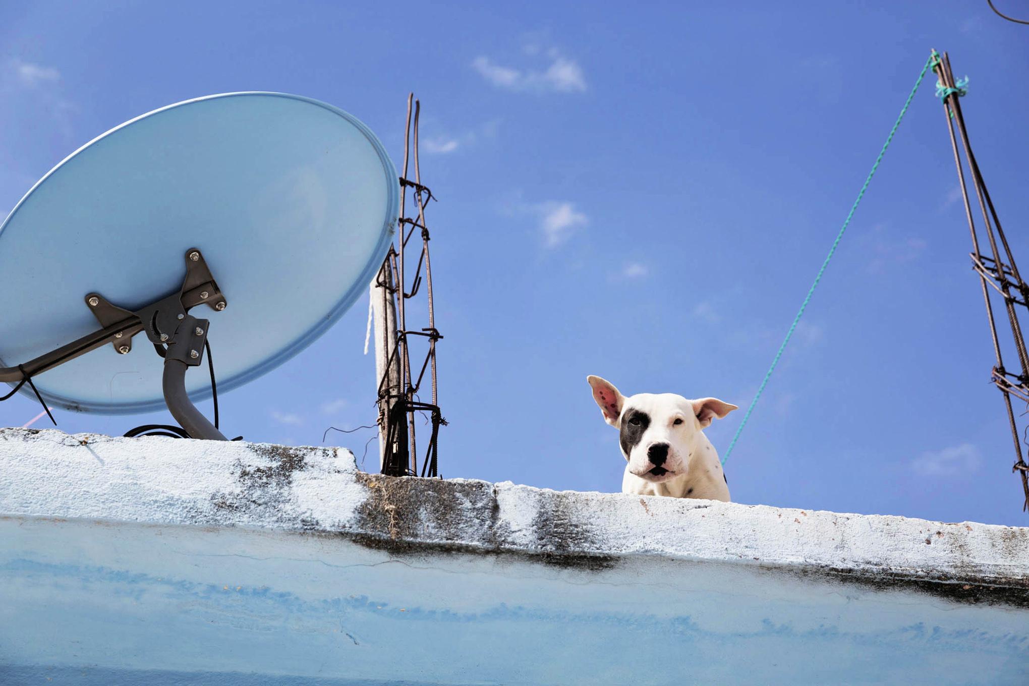 roof dogs-6.jpg