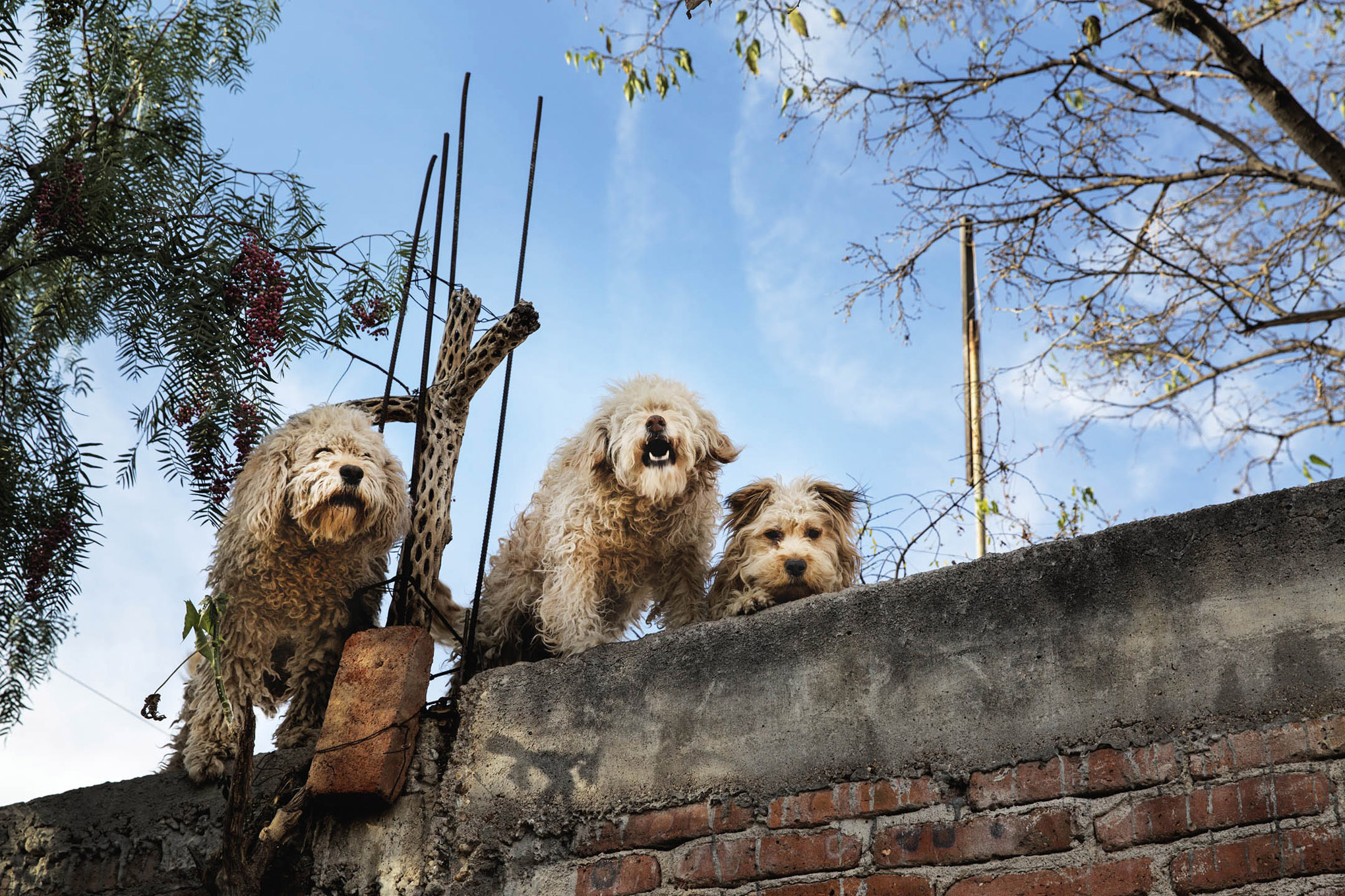 roof dogs-8.jpg