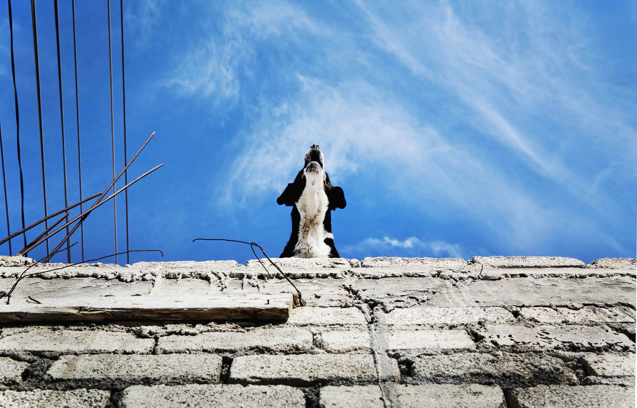 roof dogs-10.jpg