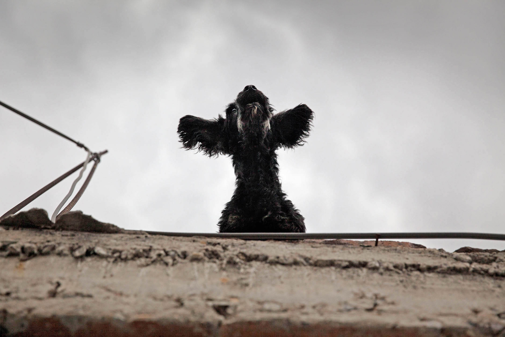 roof dogs-12.jpg