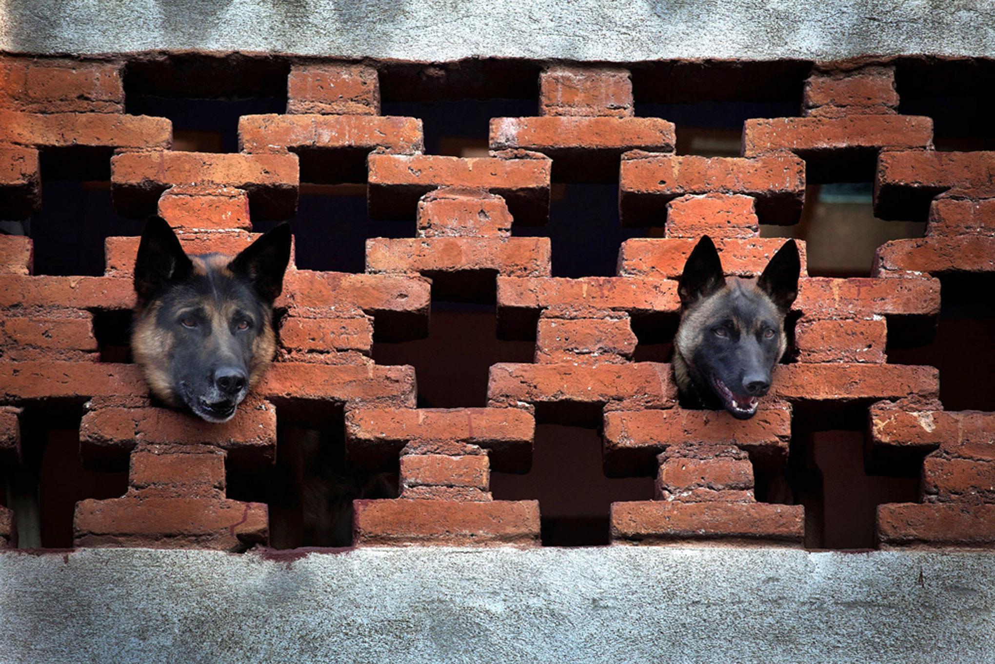 roof dogs-15.jpg