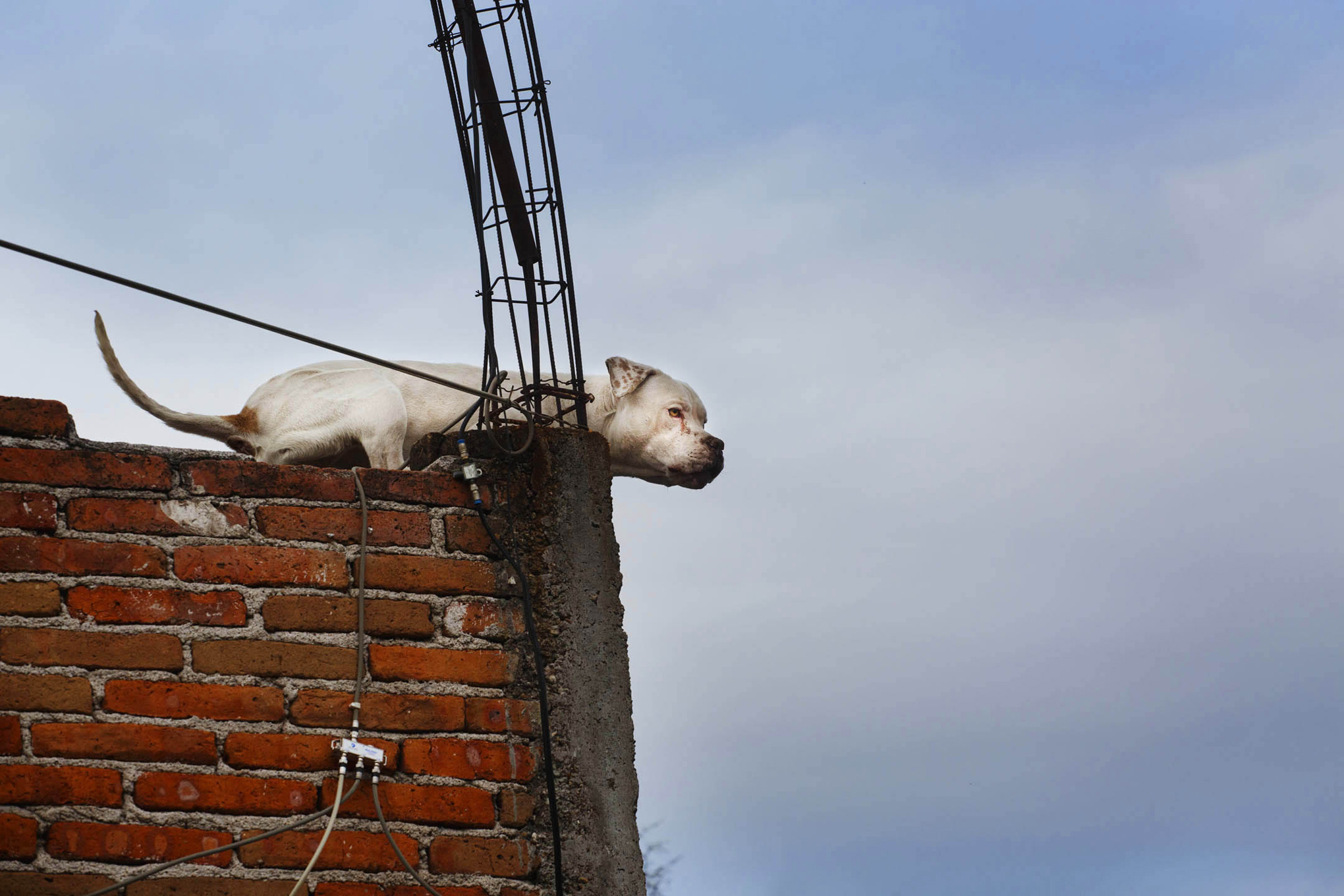 roof dogs-14.jpg