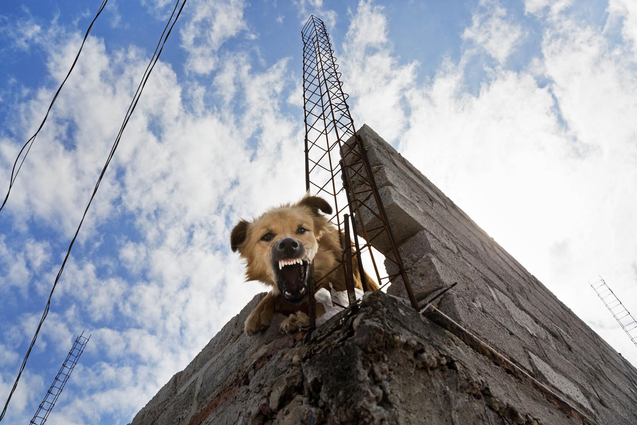 roof dogs-2.jpg