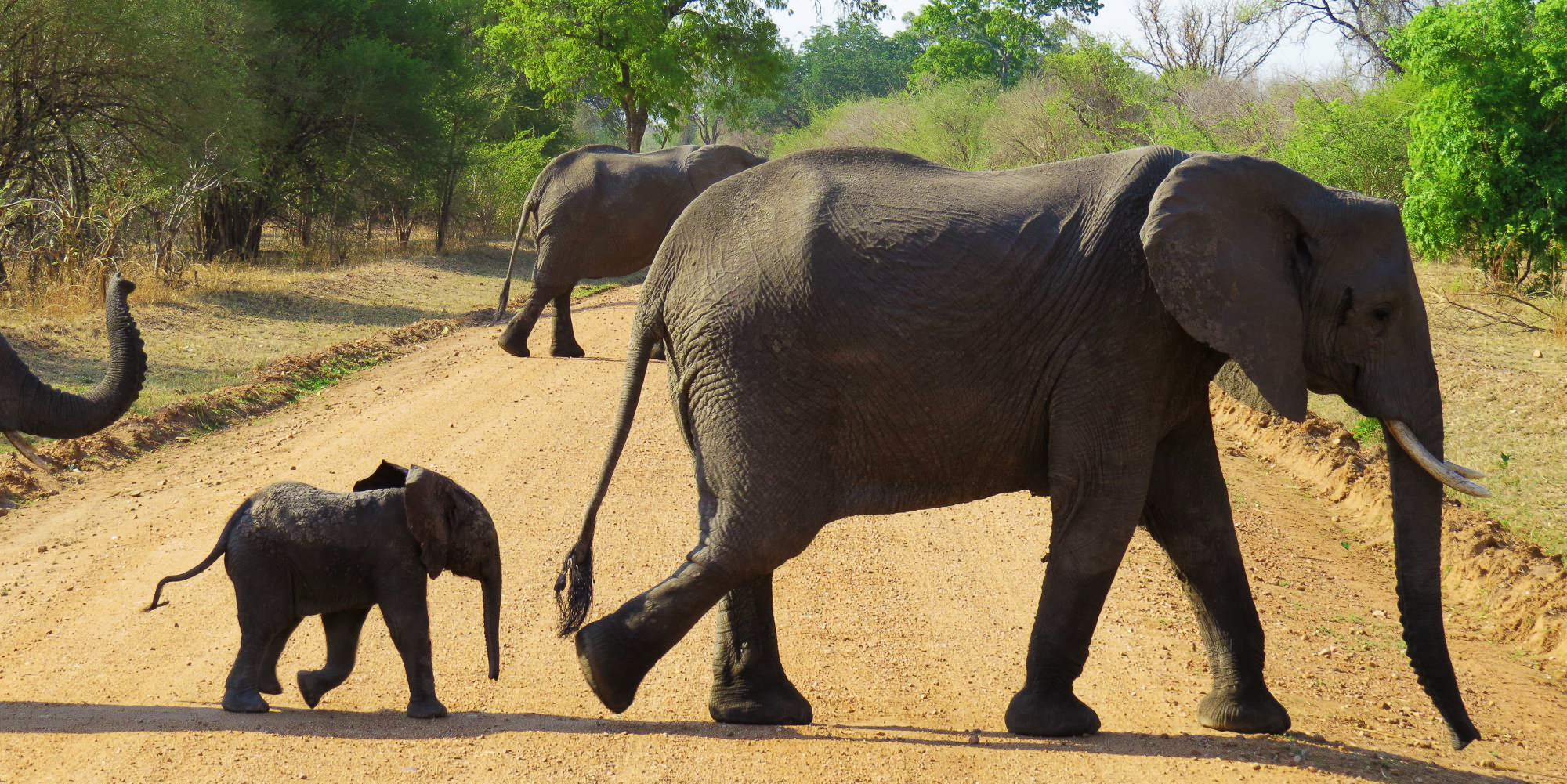 95 Elephants a day are dying at the hands of poachers. We can help make a difference together.