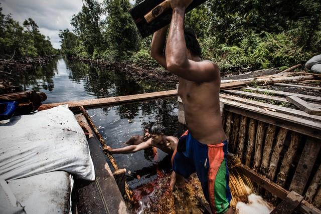 Villager in Central Kalimantan building box dam across canal.   Photo taken for exhibition on GAMBUT at COP-22 by photojournalist Kadir van Lohuizen (c).