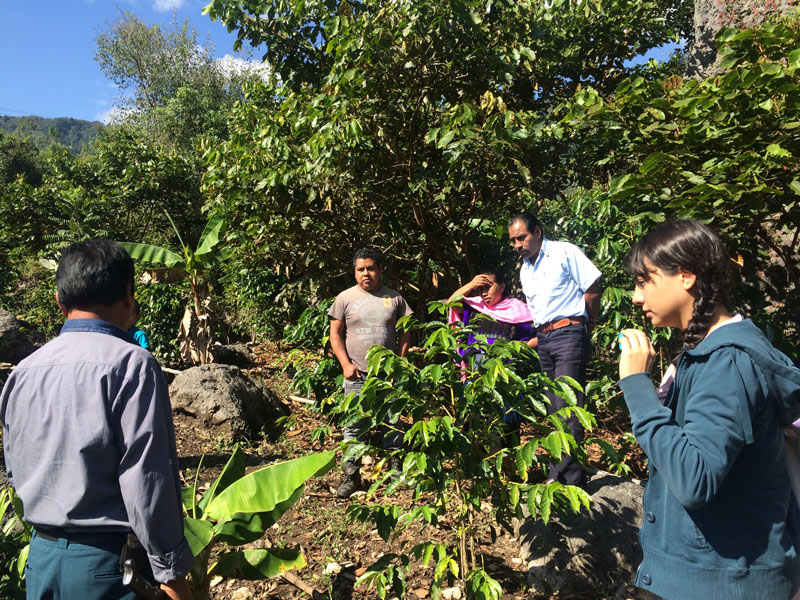 Working with coffee producers on the project with Fomento Social Banamex.