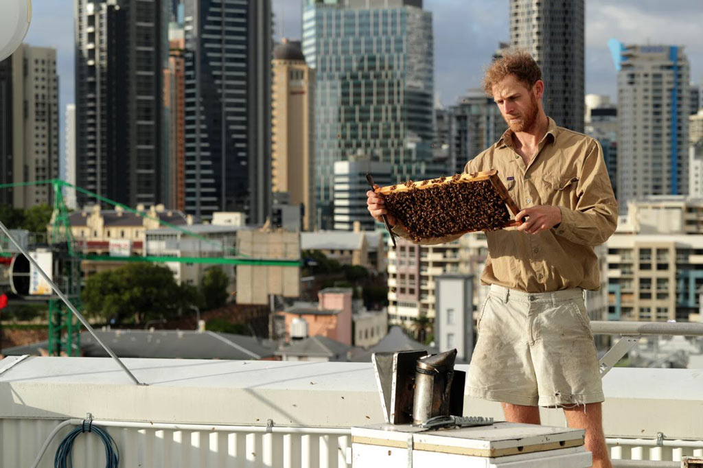 Bee-One-Third-Urban-Beekeeping-Brisbane.jpg