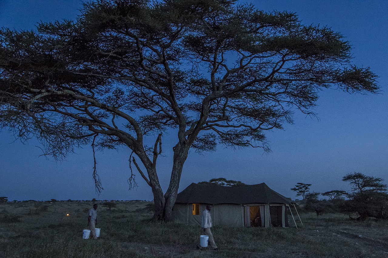 Passing under an acacia umbrella and in front of one of the luxury tents, employees of the Asilia Camp carry buckets of water to supply the guests' showers. Asilia Camp is the only tent camp located in the eastern prairies of the central part of the Serengeti, magnet for cheetahs and lion, out of the frequent passage of tourists, as off-center. The permanent camp of 8 luxury tents is set up more than an hour from its nearest neighbor. Approximately 2,700 beds in approximately 120 safari camps are available throughout the park.