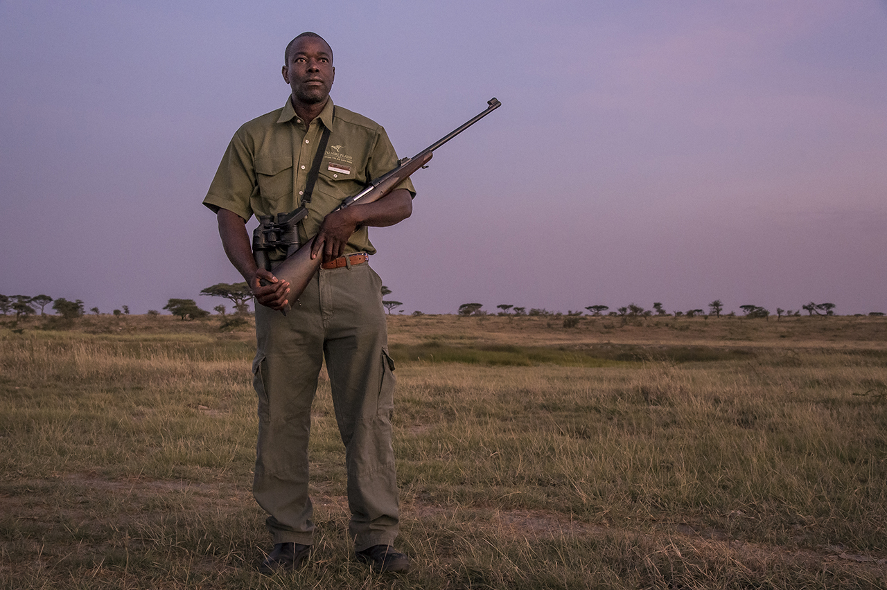 """In the early morning in the eastern part of Serengeti Park. Blessed MPOFU saw many kings come out of thickets: """"Lions often sit in the reeds and wait for the animals that come to drink,"""" said the Tanzanian pointing to the bank of the nearby river. He firmly holds his winchester, loaded in .458 caliber cartridges. Reassuring for those who walk off in the Serengeti and who can quickly believe to be lion's food. """"Stay close to me,"""" said Ncube, as the sun slid slowly over the pale yellow savanna. To communicate, a sign language dispenses only the indispensable orders: stop, slow down, crouch."""