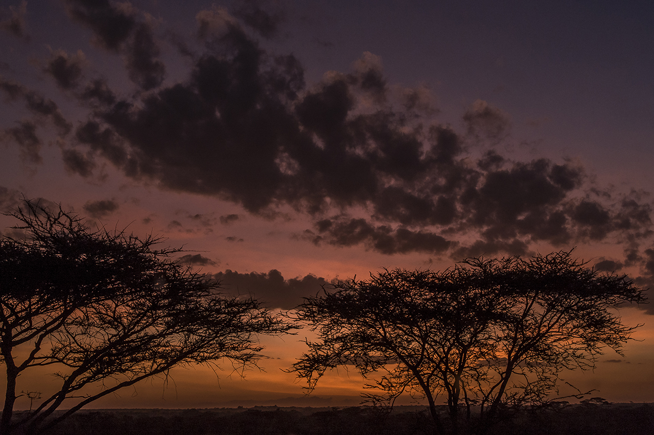 Sunset over the Serengeti plain, where typical umbrella acacias are ubiquitous.