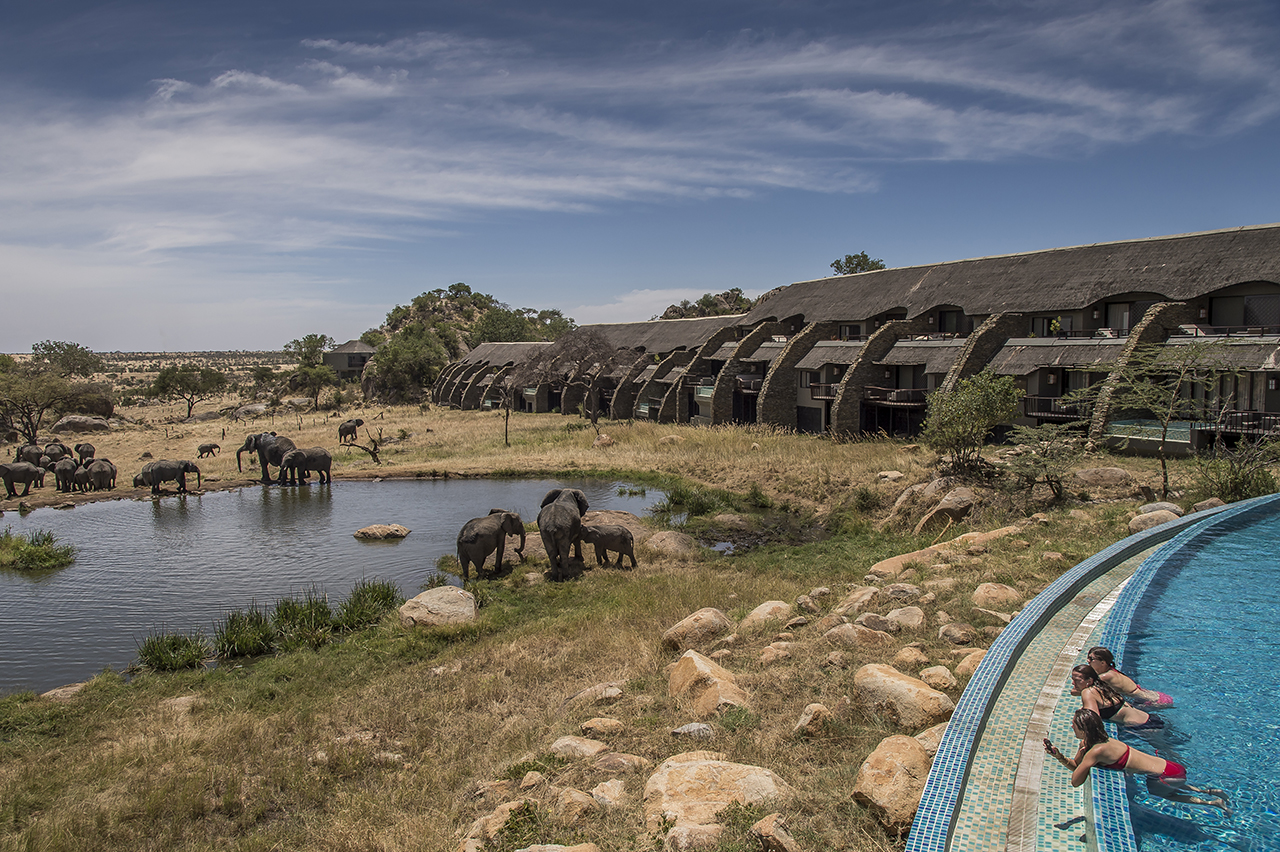 Four Seasons Safari Lodge of Serengeti, a luxurious resort, north of Seronera. The large terrace with its lounges, ends with a swimming pool. Below the basin and just a dozen meters away is an artificial water source fed by the water filtered by the hotel, allowing a direct view of the zebras, elephants and wildebeests.