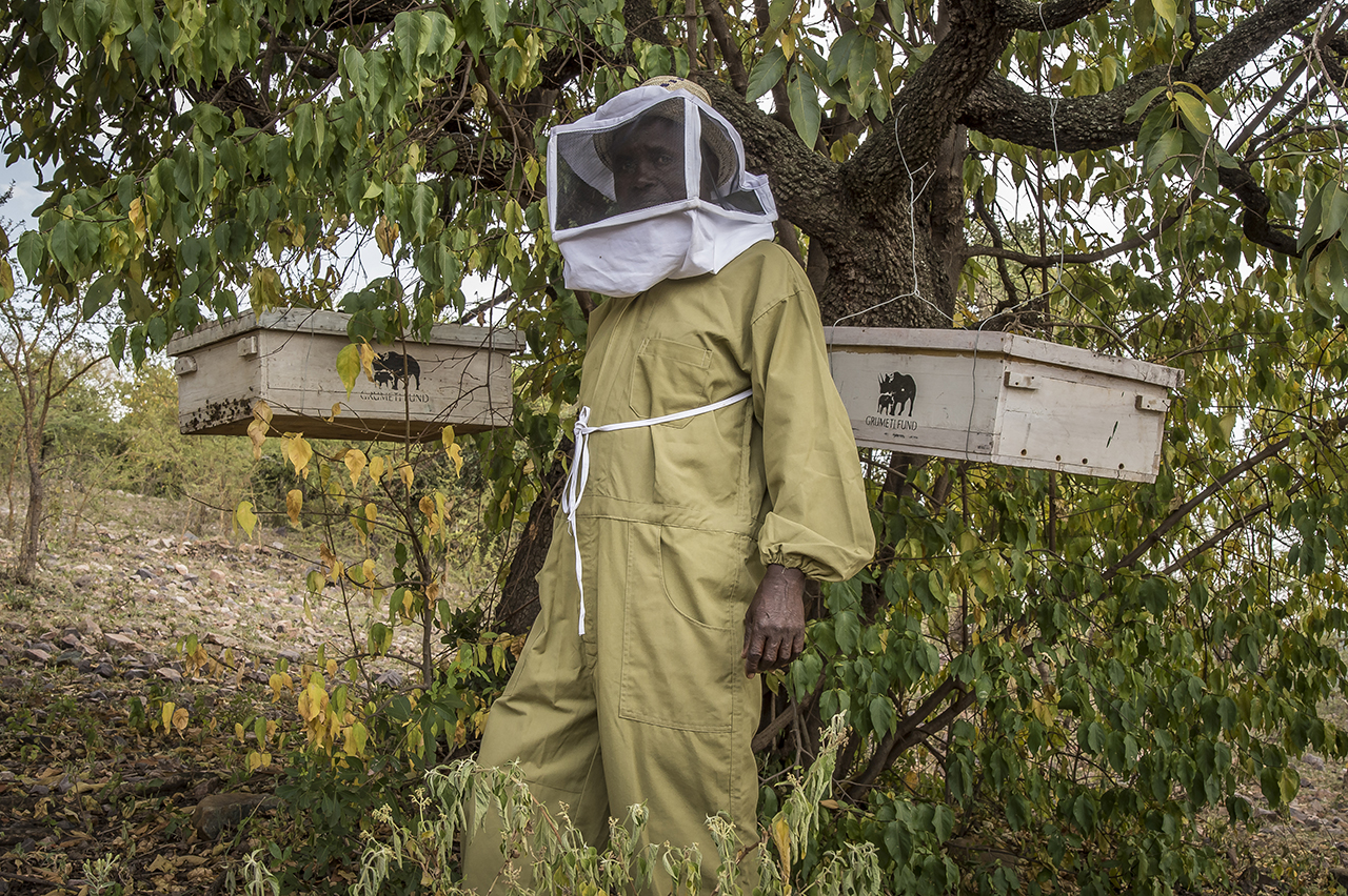 """From hunter to beekeeper, Maro Marongoli now produces honey a few kilometers from Serengeti and sells it to hotels in the region. As a member of the """"Sinduka Cocoba"""" group, he was able to start his activity and financed the purchase of the hives, thanks to a loan granted by the group's micro-credit project.  """"We were hunters,"""" explains Marongoli, """"now we take advantage of the tourists who arrive in our stores."""" Traditionally, its tribe, the Ikoma, is a hunting people. In order to support the conservation of nature, it has modified its main and traditional activity."""