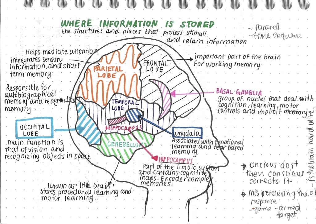 RESEARCH - understand how the brain works