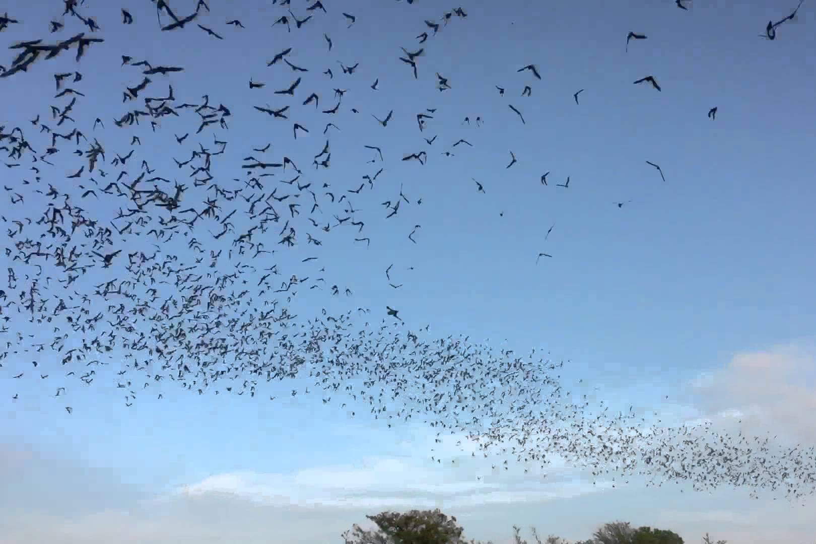 Frio-Bat-Flight-Leakey.jpg